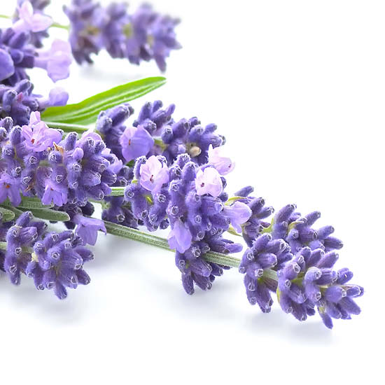 Lavender Verben Ingredient Image (alternate view 2)